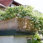 Balkonska-ograja-z-zelenjem