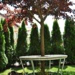 Drevesna klop domzale 1