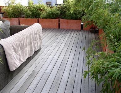 Lesena terasa sibirski macesen