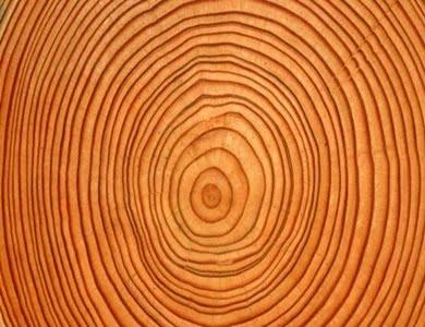gostota lesa