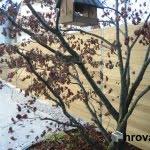 lesena ograja domžale 2 drevo